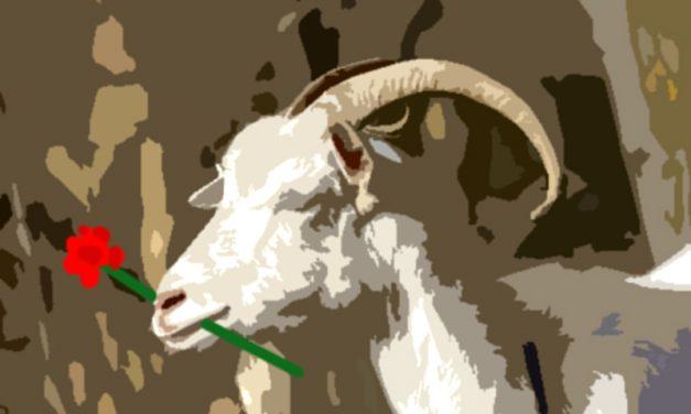 El borracho y la cabra