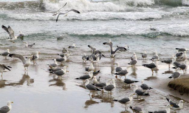 Atalayando Calpe: un blog de vacaciones
